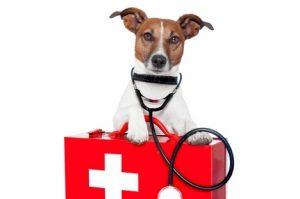 veterinary hospital near me
